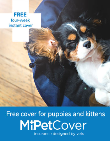 MiPetCover four weeks free for puppies and kittens