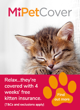 MiPet Cover kitten insurance advert